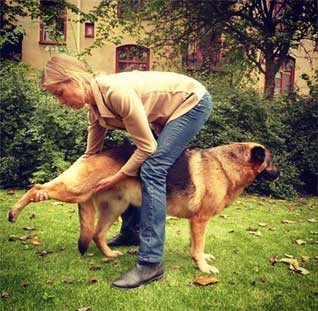 axelsons animal massage school